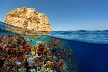 DIVING TRIP IN THE RED SEA